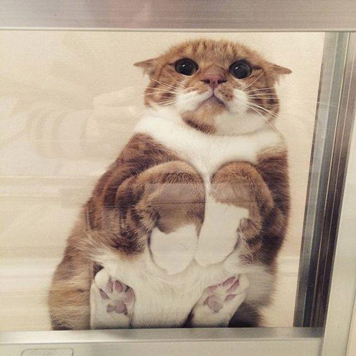 cat-on-glass2