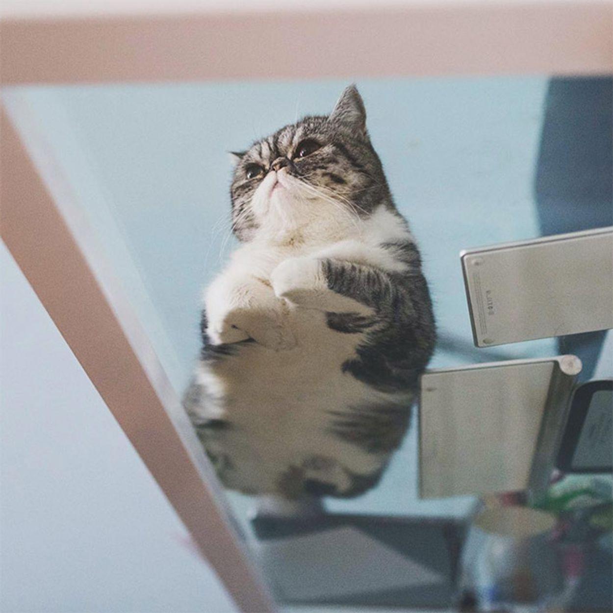 cat-on-glass8
