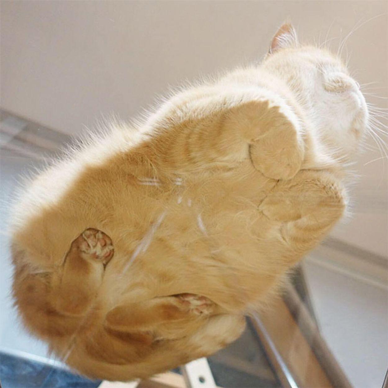 cat-on-glass3
