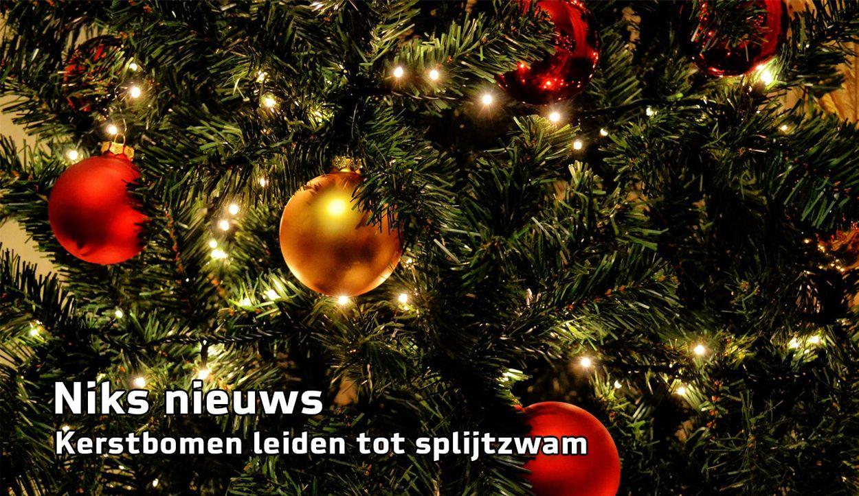 Afbeelding van Niks Nieuws: kerstbomen leiden tot splijtzwam
