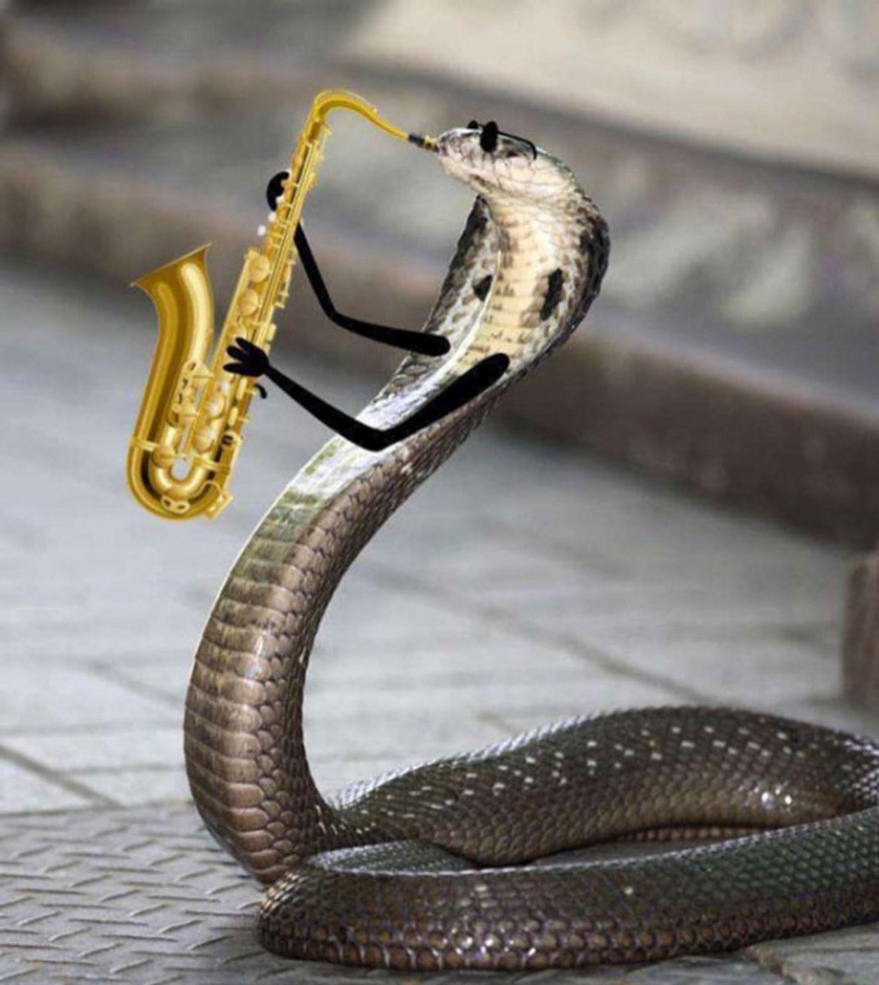 snake-doodles4