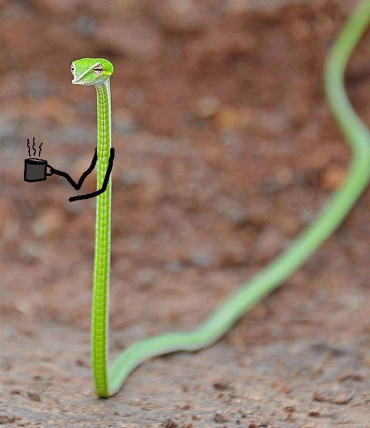 snake-doodles3