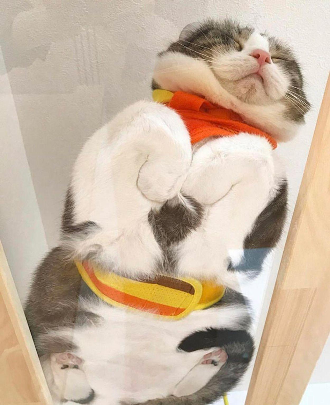 cat-on-glass5