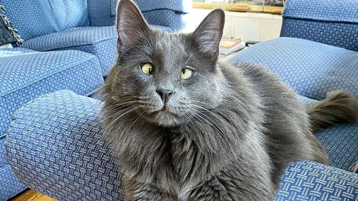Afbeelding van Feelgood Friday: de adoptie van een schele kat