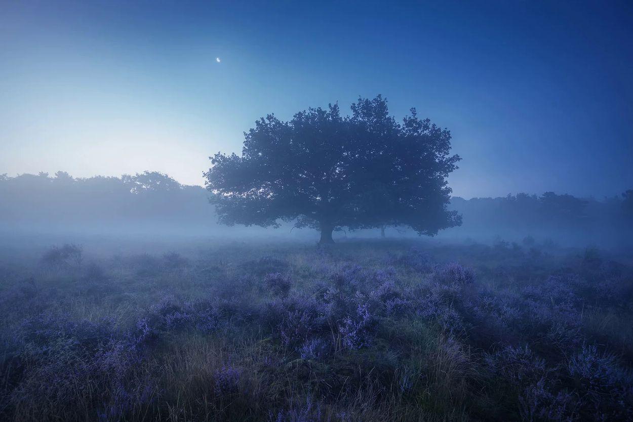 Albert Drost mist