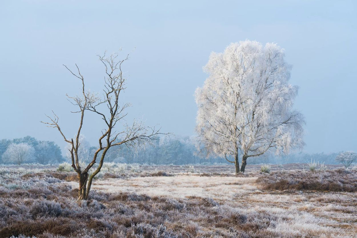 Albert Drost winter